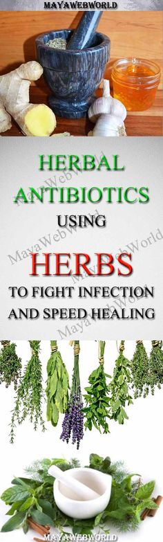 Herbal Antibiotics – Using Herbs to Fight Infection and Speed Healing – MayaWebWorld