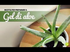 GEL D'ALOE FATTO IN CASA!!! ricetta facilissima PARTENDO DALLA PIANTA! - YouTube