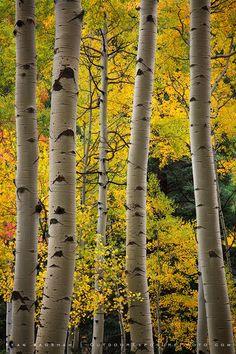Reunion by Sean Bagshaw on 500px