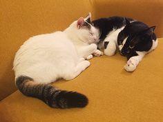Kitty, Cats, Animals, Image, Little Kitty, Gatos, Animales, Animaux, Kitty Cats