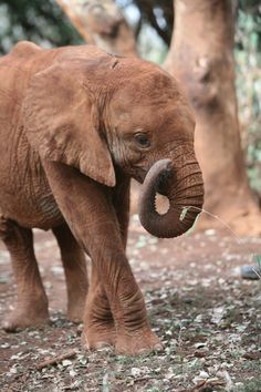 Shukuru - He's gorgeous...and #WorthMoreAlive David Sheldrick Wildlife Trust #dswt
