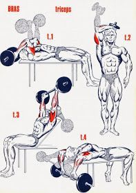 Gym World: More Than 30 Differnt Triceps Exercice ! Fitness Gym, Sport Fitness, Muscle Fitness, Fitness Motivation, Fitness Shirts, Lifting Motivation, Muscle Food, Health Fitness, Lower Ab Workouts