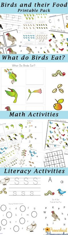 Fun bird study for kids! FREE 80+ page printable pack for learning about birds and their food.