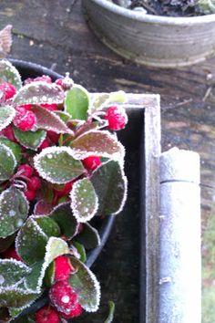 Frostiges Winterwetter