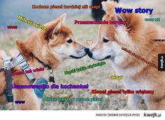 Doge Meme, Cute Dog Photos, Cute Dogs, Husky, Kawaii, Lol, Memes, Animals, Sweet