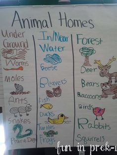 Fun in PreK-1: A Picture Palooza of Animal Homes & Life Cycles