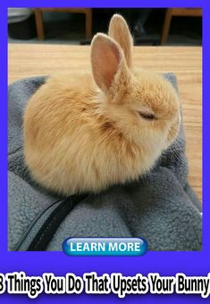 Rabbit Bunny Make, Cage, Indoor, Toy Rabbit Behavior, Small Kittens, Bunny Care, House Rabbit, Guide Dog, Boredom Busters, Budgies, Guinea Pigs, Cage