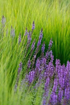 Scientific evidence suggests that aromatherapy with lavender may slow the activity of the nervous system, improve sleep quality, promote relaxation, and lift mood in people suffering from sleep disorders.