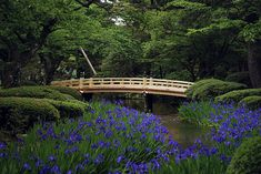 Kenrokuen Garden, Kanazawa, Japan. One of the top gardens of the country.