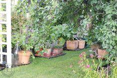 Oravankesäpesä: MINÄ PUUTARHURINA -HAASTE. Plants, Vegetable Gardening, Healthy, Flora, Plant, Planting