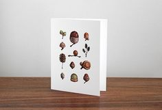 Woodland Acorns 10 Notecards  Watercolor by studiotuesday on Etsy