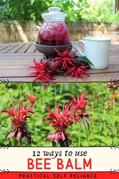 plants My first home in Vermont had a huge patch of bee balm growing right outside Healing Herbs, Medicinal Plants, Le Vermont, Herbs For Health, Flower Food, Wild Edibles, Herbal Medicine, Holistic Medicine, Growing Herbs