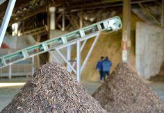IOTカーボン Part1:高機能な木炭で木質廃棄物を有効利用。|富山県 富山市|「colocal コロカル」ローカルを学ぶ・暮らす・旅する