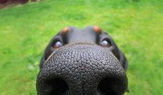 narices-perros-cerca-5