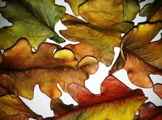 Edible Fall Leaves / Fondant Gumpaste by MysticLair