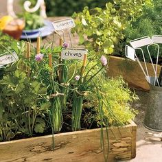 Herb boxes: Cilantro, Parsley, and Chives Garden in a small wooden box - Spectacular Container Gardening Ideas - Southern Living Container Herb Garden, Garden Pots, Vegetable Garden, Garden Ideas, Box Garden, Garden Fun, Gardening Vegetables, Small Space Gardening, Gardening Tips