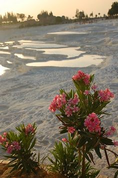beach, flowers