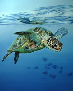 Sea Turtle Painting, Sea Turtle Art, Turtle Love, Ocean Turtle, Turtle Swimming, Beautiful Sea Creatures, Animals Beautiful, Cute Animals, Baby Sea Turtles