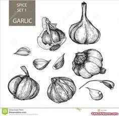 Garlic Tattoo Design | Tattoo Viewer.com