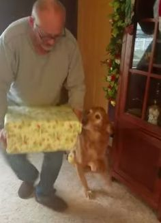 This 12 year old retriever gets the best Christmas present! Animals And Pets, Funny Animals, Cute Animals, Best Christmas Presents, Christmas Fun, Pet Puppy, Pet Dogs, Biewer Yorkshire, Getting A Kitten