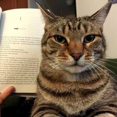 Trying to read with cats - http://cutecatshq.com/cats/trying-to-read-with-cats/