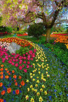 Skagit Valley Tulip Fields, Mt. Vernon, Washington
