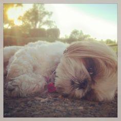 Sleepy little dog.