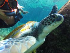 Photo of the Day! Turtle Selfie. Photo byNik DePasquale.  Share your animal photos: g.gopro.com/animal-submit