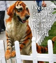 34 Hilarious Animal Picturesfor a Smile #funnydogs #funnycats #funnyanimals #funnypics #animalpics