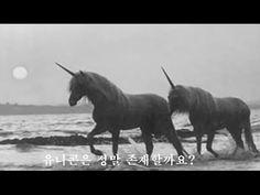 미스터리 사건 카메라에 생생하게 포착된 유니콘 Mystery Case Unicorn captured vividly in camera