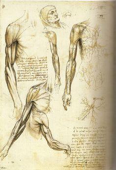 Drawings By Da Vinci   Leonardo da Vinci's Anatomical Drawings by `SRaffa on deviantART