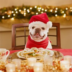 """As he looked upon the bountiful feast and loving company around him, Tiny Tim the Frenchie couldn't help but exclaim, """"Dog bless us, every one!"""" :)"""