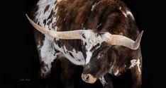 """""""Bos Taurus"""" ll Longhorn Wall Art on Canvas"""