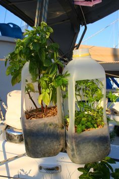 Our milk bottle herb planters, great for hanging on the life lines.