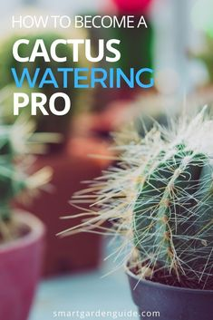 Cactus Water, Cactus Plants, Cacti, Easy Care Indoor Plants, How To Grow Cactus, Cactus Types, Smart Garden, House Plant Care, Garden Guide