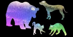 The first study to actually count the number of cortical neurons in the brains of a number of carnivores, including cats and dogs, has found that dogs possess significantly more of them than cats.