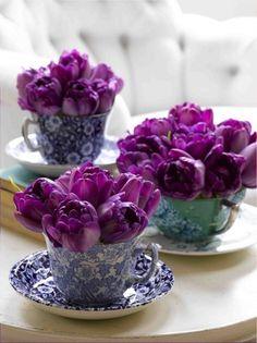 Vintage teacups filled with purple tulips