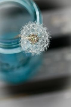 "Dandelion in a blue jar, via Flickr. BLUE MASON JARS WITH DANDELION FLUFF!! just add burlap, rusty barn stars and its a perfect ""wish"""