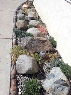 Growing rock garden