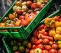 Vincent Bocel… Monsieur tomates