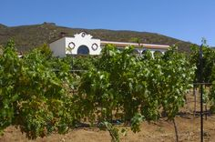 Contamos con 4 hectáreas de viñedos, ubicados al frente del hotel y restaurante, con uvas Merlot, Tempranillo y Cabernet Sauvignon.