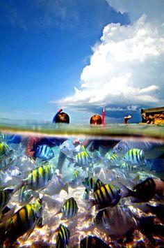 Cozumel, Playa El Cielo.