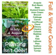 What to Plant in July  August
