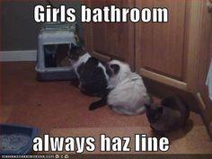 Always haz line