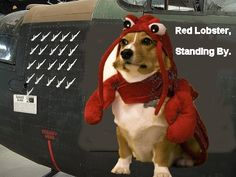 if memes were art on old fighter planes...