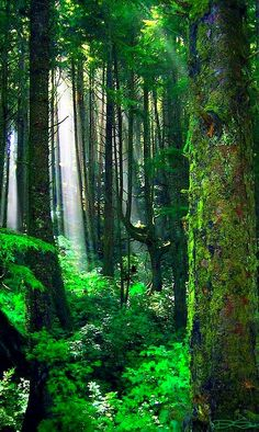 """Image source: green forest > ~ """"The earth has music for those who listen"""" Magical Forest, Deep Forest, Forest And Wildlife, Forever Green, Story Setting, Green Earth, Gods And Goddesses, Nature Pictures, Amazing Nature"""
