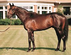 "Kentucky Derby Winner 1993 ""Sea Hero"""