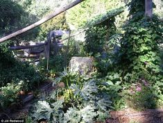 Ms Redwood's fruit and vegetable garden, which is covered in netting to keep the possums out
