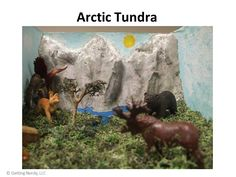 Students show what they know about an ecosystem by building a diorama