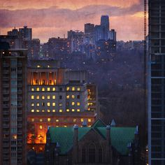 Toronto's Mixed Forest. After Fiery Sunset by Katrin Ray, via Flickr